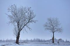 Туманный зимний день в Литве Стоковые Фото