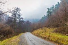 Туманный ландшафт леса утра Стоковые Изображения RF