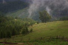 Туманный ландшафт с лесом ели, верхние части прикарпатской горы деревьев вставляя из тумана стоковые изображения