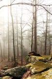 Туманный лес с деревьями стоковое изображение rf
