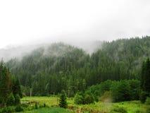Туманный лес с облаками в озере Lacul Rosu, Transsylvania, Румынии стоковая фотография rf