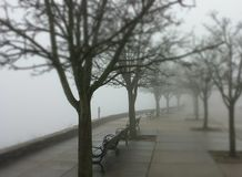 Туманный обозите Стоковые Изображения