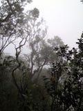 Туманный дождевой лес, Борнео, Малайзия стоковое фото rf