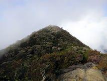 Туманный дождевой лес, Борнео, Малайзия стоковое изображение rf
