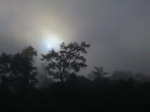 Туманный дождевой лес, Борнео, Малайзия стоковая фотография