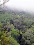 Туманный дождевой лес, Борнео, Малайзия стоковая фотография rf