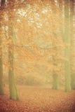 Туманный парк осени в туманном дне Стоковая Фотография