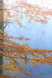 Туманный парк осени в туманном дне Стоковые Фотографии RF