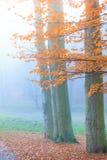 Туманный парк осени в туманном дне Стоковые Фото