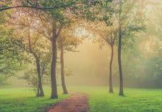 туманный парк утра стоковое изображение