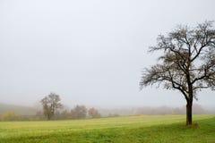 Туманный пейзаж осени Стоковое Изображение