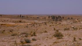 Туманный помох над пустыней Сахары, пальмами и заводами пустыни на предпосылке неба сток-видео