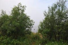 туманный пруд Стоковые Изображения