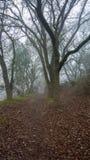 Туманный путь в древесинах в зиме стоковые фотографии rf