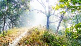Туманный путь, дерево в лесе стоковая фотография