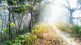 Туманный путь, дерево в лесе стоковые фотографии rf
