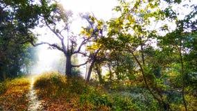 Туманный путь, дерево в лесе стоковые изображения rf
