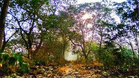Туманный путь, дерево в лесе стоковое фото