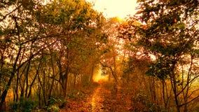 Туманный путь, дерево в лесе стоковое изображение