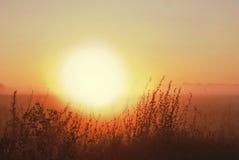Туманный рассвет в лугах Стоковое фото RF