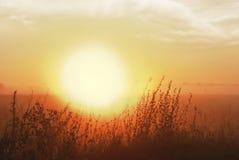 Туманный рассвет в лугах Стоковое Фото