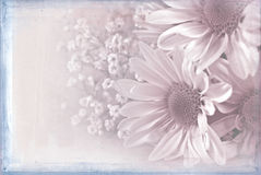 Туманный розовый букет маргаритки стоковые фотографии rf