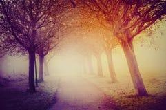 Туманный сад 2 осени Стоковые Изображения