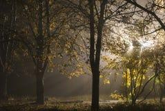 Туманный свет осени стоковые фотографии rf