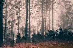 Туманный сосновый лес на острове Мадейры, Португалии стоковое фото