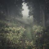 Туманный след Стоковое фото RF