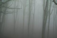 Туманный темный лес Стоковая Фотография RF