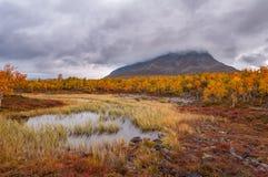 Туманный холм в цветах осени красных и желтых стоковое фото