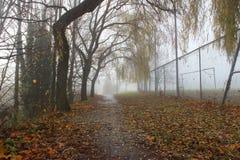 Туманный Стоковое Фото