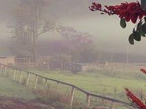 Туманный paddock утра страны с сараями фермы стоковые изображения rf