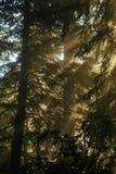 Туманы через ветви Стоковое Изображение RF