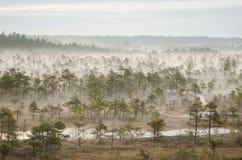 Туман в болоте Kemeri Стоковое Фото