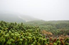 Туман в горах стоковые фото