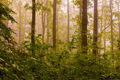 Туман в древесинах в утре Утро в древесинах во время Стоковые Изображения