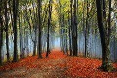 Туман в лесе во время осени Стоковое Изображение RF