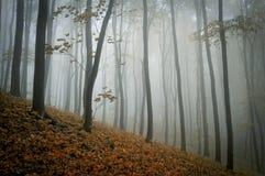 Туман в лесе в осени Стоковое Фото