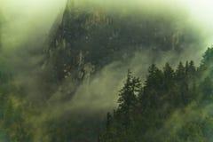 Туман в лесе Гималаев Стоковое фото RF