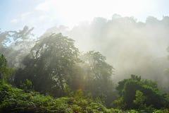 Туман в лесе стоковое изображение