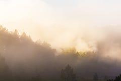 Туман в лесе стоковая фотография rf