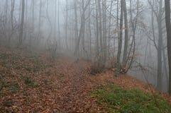 Туман в лесных деревьях Стоковые Фотографии RF