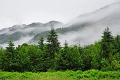 Туман в зеленом лесе Стоковое Изображение