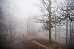 Туман в лесе в горах Германии Harz стоковое изображение rf