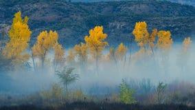 Туман в октябре в каньоне стоковые фото