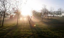 Туман в парке Стоковая Фотография RF