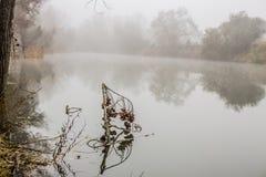 Туман в реке Стоковая Фотография