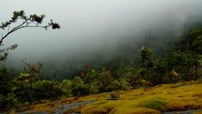 туман в середине леса стоковое фото rf